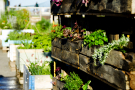Image for the news item: Canberra – the Food Garden Capital